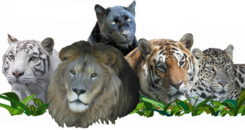 Make a Donation to WI Big Cat Rescue