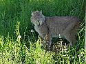 Feed a Lynx